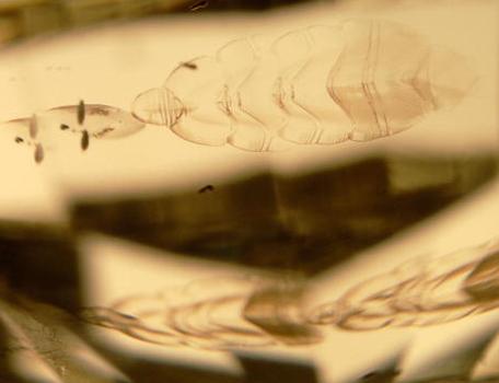 Fish scale inclusion in diamond