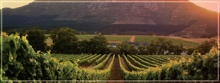 Go for a beautiful and romantic walk while visiting a wine farm